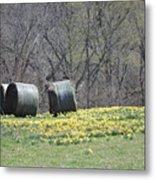 Daffodil Bales Metal Print