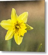 Daffodil Composite Metal Print