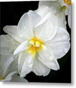 Daffodil Diagonal Metal Print
