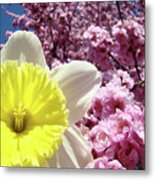 Daffodil Flower Art Prints Pink Tree Blossoms Blue Sky Baslee Metal Print