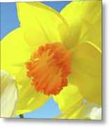 Daffodil Flowers Artwork 18 Spring Daffodils Art Prints Floral Artwork Metal Print by Baslee Troutman