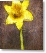 Daffodil Pencil Metal Print