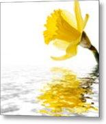 Daffodil Reflected Metal Print by Jane Rix