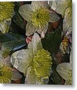 Daffodil Study Metal Print