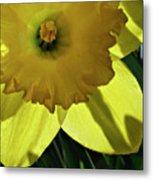 Daffodil Sun Metal Print