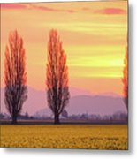 Daffodil Sunrise Metal Print