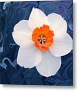 Daffodill In Blue Metal Print