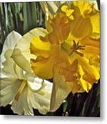 Daffodils 4 Metal Print