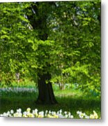 Daffodils And Narcissus Under Tree Metal Print