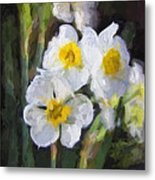 Daffodils In My Garden Metal Print