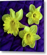 Daffodils On A Purple Quilt Metal Print