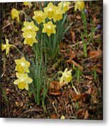 Daffodils With A Purple Flower Metal Print
