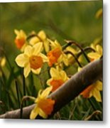 Daffy In The Woods Metal Print