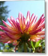 Dahlia Floral Garden Art Prints Canvas Summer Blue Sky Baslee Troutman Metal Print