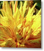 Dahlia Flower Art Collection Giclee Prints Baslee Troutman Metal Print