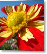 Dahlia Flower Art Prints Canvas Red Yellow Dahlias Baslee Troutman Metal Print