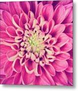 Dahlia Flower Petals Pattern Close-up Metal Print