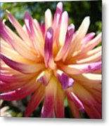Dahlia Flowers Art Pink Purple Dahlias Giclee Baslee Troutman Metal Print