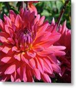Dahlia Flowers Garden Art Prints Baslee Troutman Metal Print