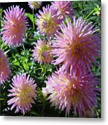 Dahlia Group Metal Print
