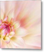 Dahlia Metal Print by John Edwards