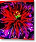 Dahlia Rouge Texture Avec La Frontiere  Metal Print