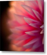 Dahlia Sunset Metal Print