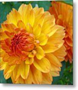 Dahlias Art Prints Orange Dahlia Flowers Baslee Troutman Metal Print