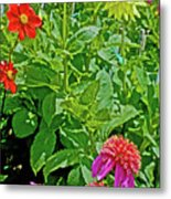 Dahlias By A Fence In Golden Gate Park In San Francisco, California  Metal Print