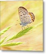 Dainty Butterfly  Metal Print