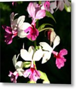 Dainty Orchids Metal Print