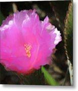 Dainty Pink Cactus Flower Metal Print