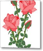 Daiquiri Roses In January 2010 Metal Print