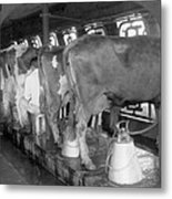 Dairy Farm, C1920 Metal Print