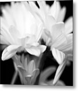 Daises In Black And White Metal Print