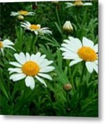 Daisey Delight Metal Print