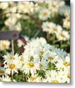 Daisies And A Hand Plow Metal Print