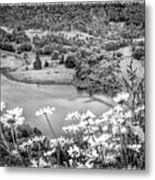 Daisies At Queens View In Greyscale Metal Print