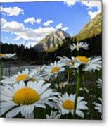 Daisies By Mcdonald Creek With Mt Cannon, Glacier Park Metal Print