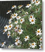 Daisies By The Bench Metal Print