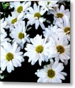Daisies By The Dozen Metal Print
