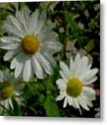 Daisies By The Number Metal Print