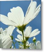 Daisies Floral Art Prints Canvas Daisy Flowers Blue Skies Metal Print