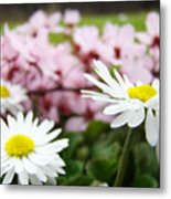 Daisies Flowers Art Prints Spring Flowers Artwork Garden Nature Art Metal Print