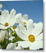 Daisies Flowers Art Prints White Daisy Flower Gardens Metal Print