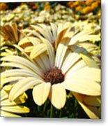 Daisies Flowers Landscape Art Prints Daisy Floral Baslee Troutman Metal Print