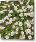 Daisies In Spring Metal Print