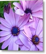 Daisies Lavender Purple Daisy Flowers Baslee Troutman Metal Print