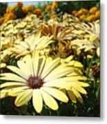 Daisies Yellow Daisy Flowers Garden Art Prints Baslee Troutman Metal Print