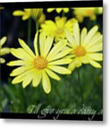 Daisy A Day Metal Print